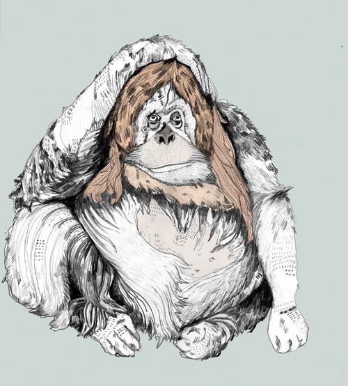 orangutan-sandradieckmann